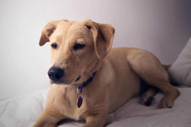 Bildertagebuch - Belle: junges Hunde- Fräulein wünscht eine eigene Familie...VERMITTELT! 30167036rk