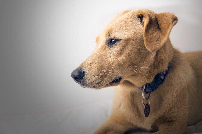 Bildertagebuch - Belle: junges Hunde- Fräulein wünscht eine eigene Familie...VERMITTELT! 30167042ab