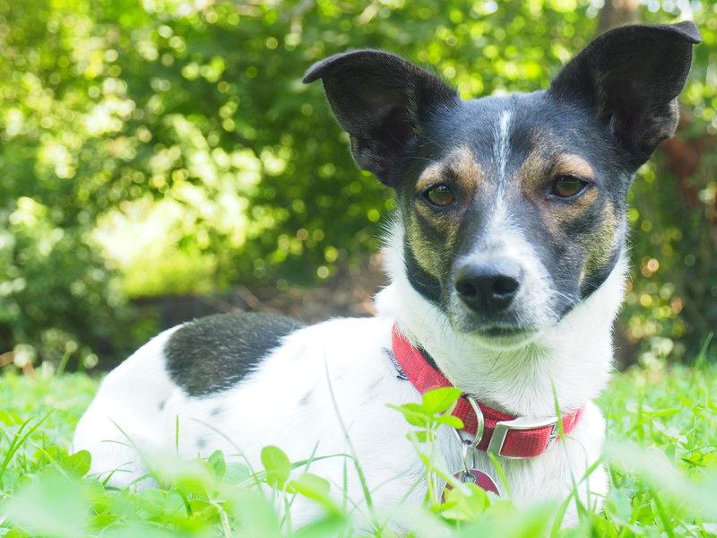 Bildertagebuch -  Virgola: niedliches, kleines Hundemädchen mit viel Witz und Charme sucht Familienanschluß! 30222056ku