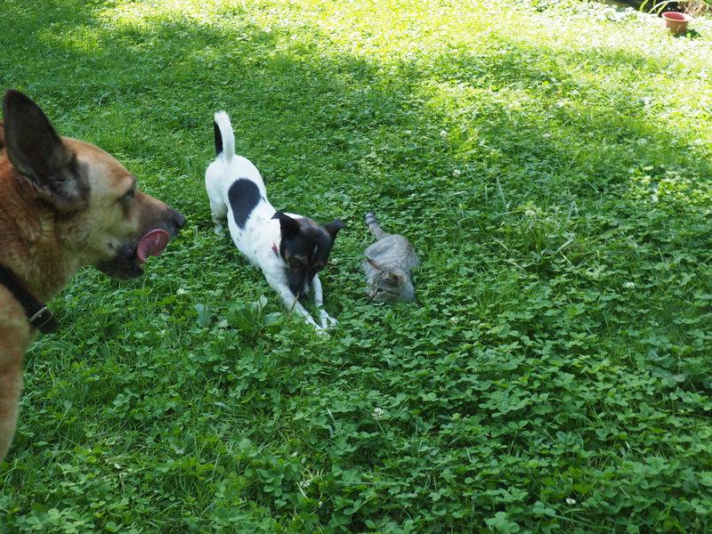 Bildertagebuch -  Virgola: niedliches, kleines Hundemädchen mit viel Witz und Charme sucht Familienanschluß! 30222063rz