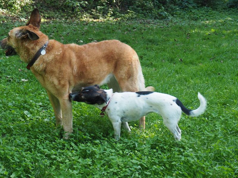 Bildertagebuch -  Virgola: niedliches, kleines Hundemädchen mit viel Witz und Charme sucht Familienanschluß! 30222065yy