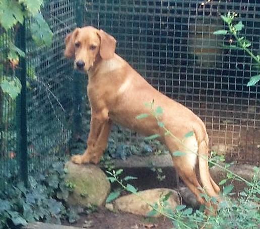 Bildertagebuch - AXEL, ein aufgewecktes Hundekind sucht ein Sofa... - VERMITTELT! 30274043cg