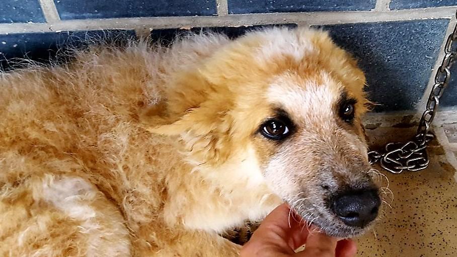 Bildertagebuch- HARRY, hübsches orange-weisses Hundekind sucht seine Menschen...wird über ANDEREN VEREIN VERMITTELT! 30274392ep