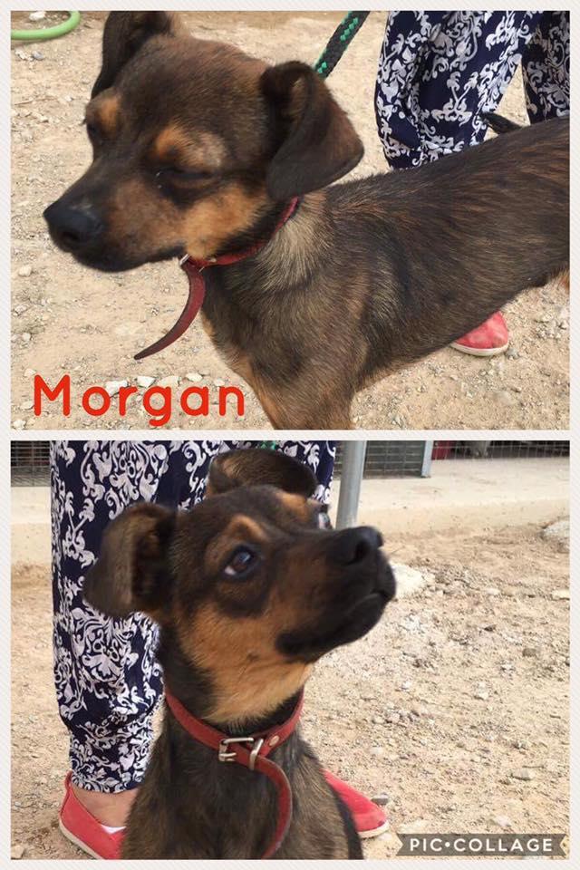 Bildertagebuch - Morgan: James Morgan, ein Winzling will leben - VERMITTELT! 30433547jl