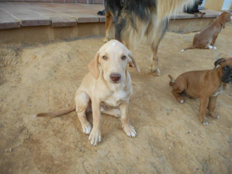 Bildertagebuch- Bufi, knuffiges Hundekind sucht eine Familie für Spielen, Kuscheln und viele gemeinsame Abenteuer ...VERMITTELT! 30455486il