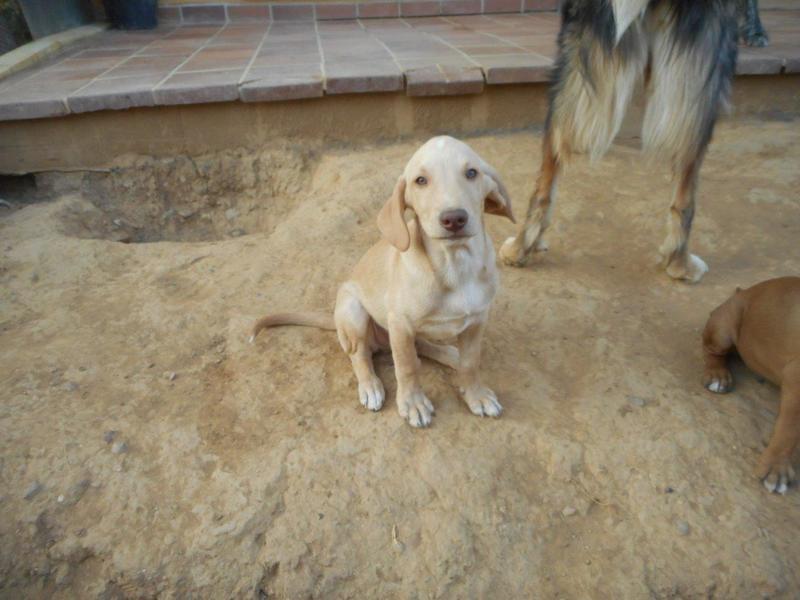 Bildertagebuch- Bufi, knuffiges Hundekind sucht eine Familie für Spielen, Kuscheln und viele gemeinsame Abenteuer ...VERMITTELT! 30455487ex