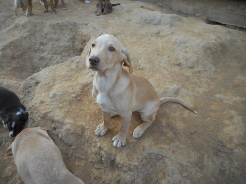 Bildertagebuch- Bufi, knuffiges Hundekind sucht eine Familie für Spielen, Kuscheln und viele gemeinsame Abenteuer ...VERMITTELT! 30455489ib