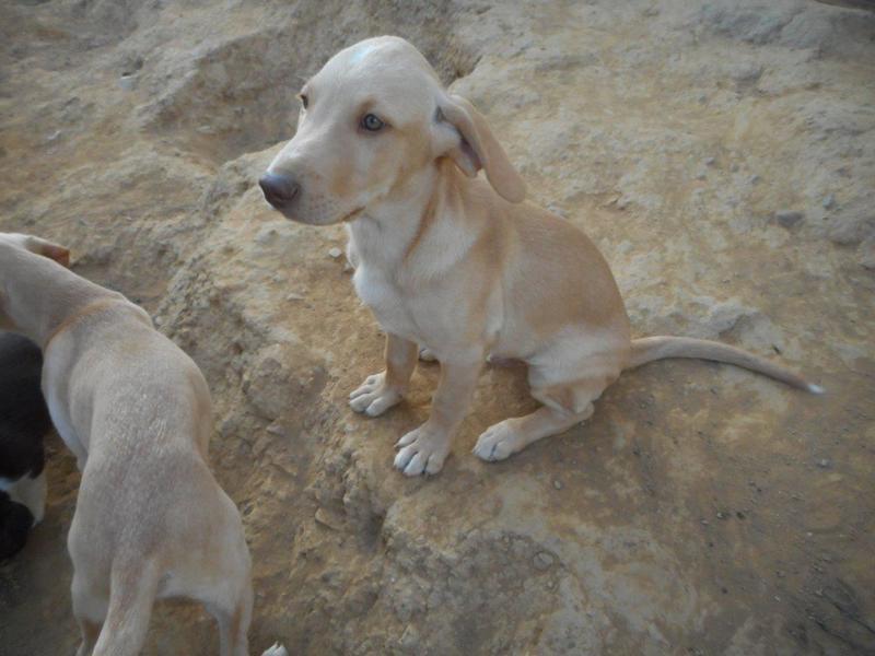 Bildertagebuch- Bufi, knuffiges Hundekind sucht eine Familie für Spielen, Kuscheln und viele gemeinsame Abenteuer ...VERMITTELT! 30455491wh