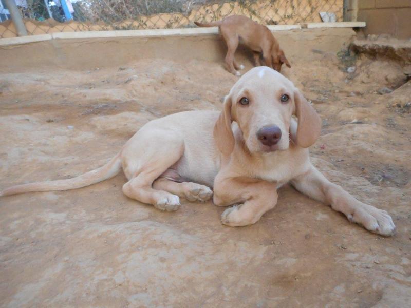 Bildertagebuch- Bufi, knuffiges Hundekind sucht eine Familie für Spielen, Kuscheln und viele gemeinsame Abenteuer ...VERMITTELT! 30455492jc