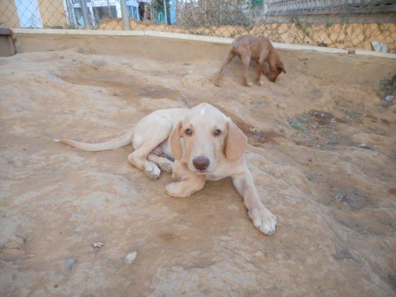 Bildertagebuch- Bufi, knuffiges Hundekind sucht eine Familie für Spielen, Kuscheln und viele gemeinsame Abenteuer ...VERMITTELT! 30455494nt