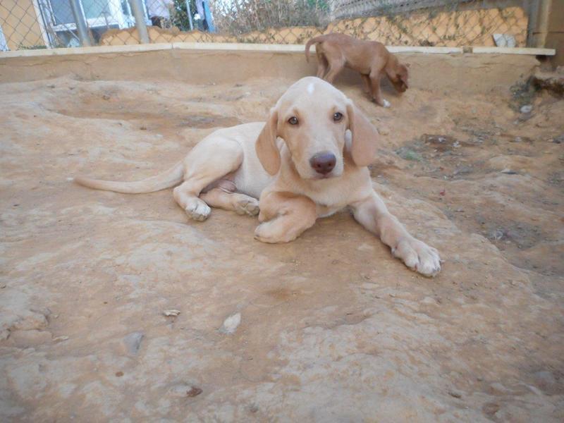 Bildertagebuch- Bufi, knuffiges Hundekind sucht eine Familie für Spielen, Kuscheln und viele gemeinsame Abenteuer ...VERMITTELT! 30455495rw