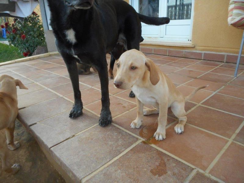 Bildertagebuch- Bufi, knuffiges Hundekind sucht eine Familie für Spielen, Kuscheln und viele gemeinsame Abenteuer ...VERMITTELT! 30455496la