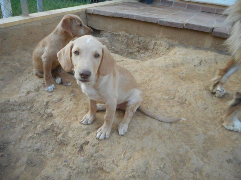 Bildertagebuch- Bufi, knuffiges Hundekind sucht eine Familie für Spielen, Kuscheln und viele gemeinsame Abenteuer ...VERMITTELT! 30455497vm