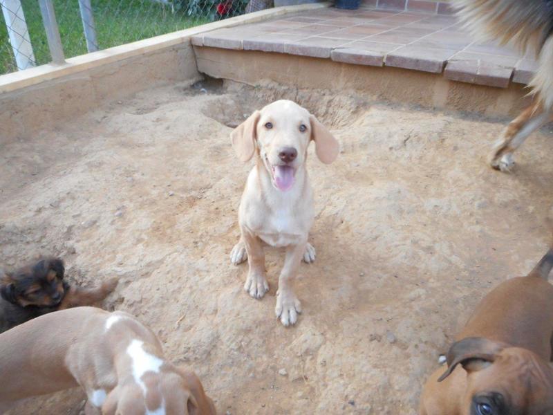 Bildertagebuch- Bufi, knuffiges Hundekind sucht eine Familie für Spielen, Kuscheln und viele gemeinsame Abenteuer ...VERMITTELT! 30455502ik