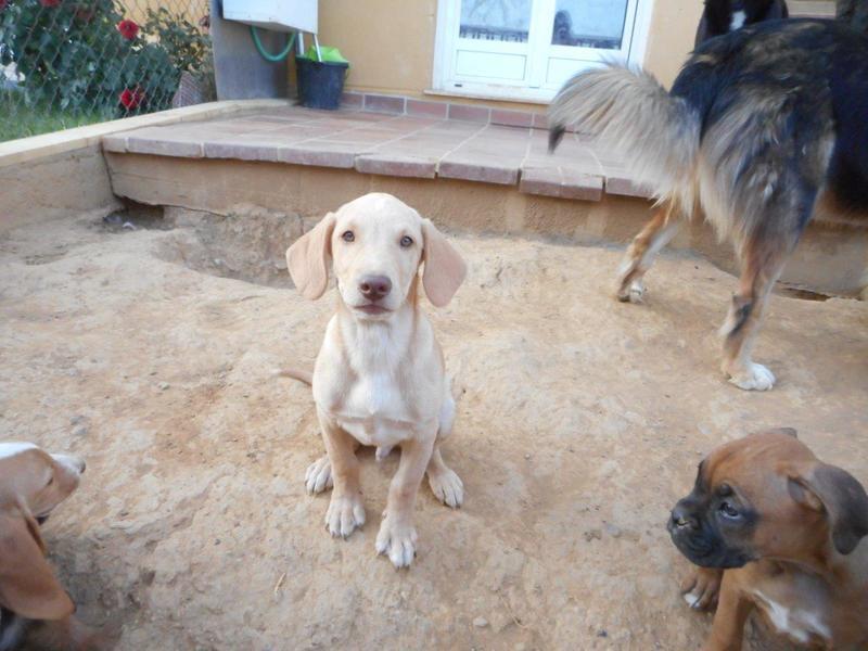 Bildertagebuch- Bufi, knuffiges Hundekind sucht eine Familie für Spielen, Kuscheln und viele gemeinsame Abenteuer ...VERMITTELT! 30455504fu