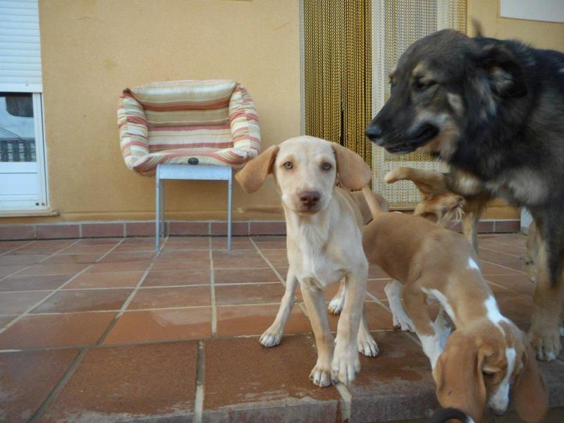 Bildertagebuch- Bufi, knuffiges Hundekind sucht eine Familie für Spielen, Kuscheln und viele gemeinsame Abenteuer ...VERMITTELT! 30455505eb