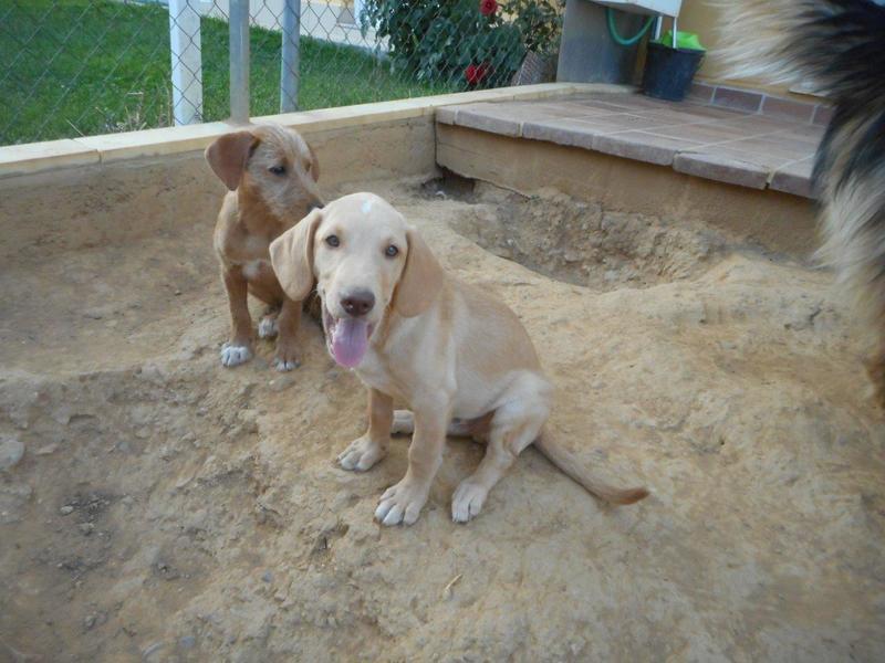 Bildertagebuch- Bufi, knuffiges Hundekind sucht eine Familie für Spielen, Kuscheln und viele gemeinsame Abenteuer ...VERMITTELT! 30455506ul