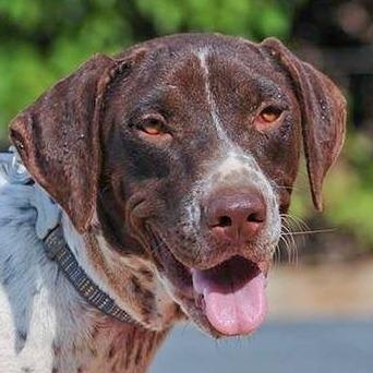 Bildertagebuch - Guiness: ein Hundekumpel fürs Leben - VERMITTELT - 30455623po