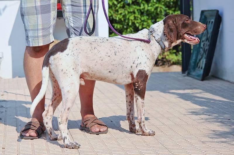 Bildertagebuch - Guiness: ein Hundekumpel fürs Leben - VERMITTELT - 30455666lq