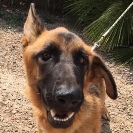 Bildertagebuch- Flopsy, eine ganz liebe sensible Hundedame die immer trauriger wurde und abmagerte, sie hatte sich aufgegeben ... VERMITTELT! 30455923eb