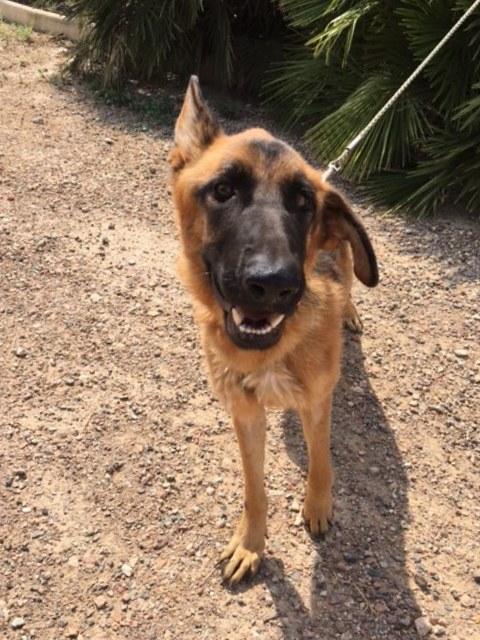 Bildertagebuch- Flopsy, eine ganz liebe sensible Hundedame die immer trauriger wurde und abmagerte, sie hatte sich aufgegeben ... VERMITTELT! 30455925aj