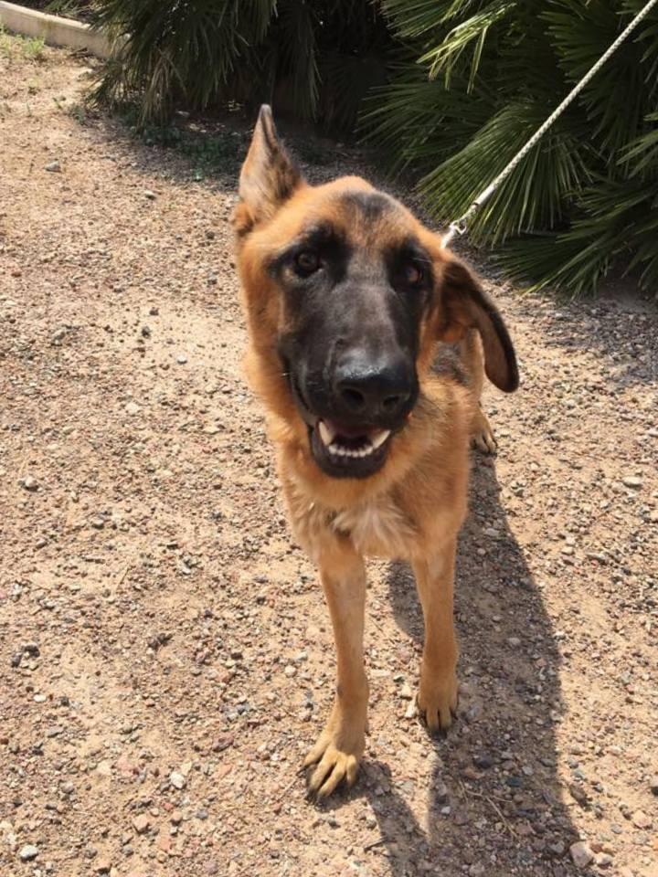 Bildertagebuch- Flopsy, eine ganz liebe sensible Hundedame die immer trauriger wurde und abmagerte, sie hatte sich aufgegeben ... VERMITTELT! 30455926nf