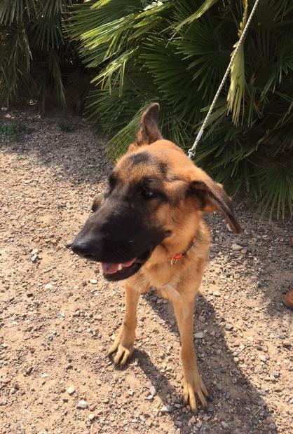 Bildertagebuch- Flopsy, eine ganz liebe sensible Hundedame die immer trauriger wurde und abmagerte, sie hatte sich aufgegeben ... VERMITTELT! 30455928qe