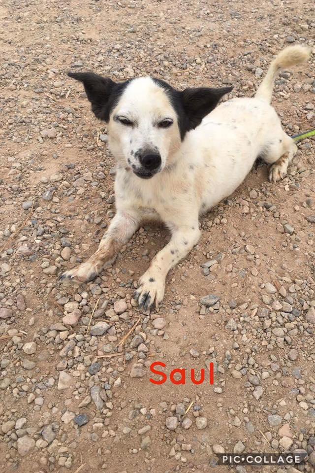 Bildertagebuch - Saul (jetzt Chacco): Ein echter Freund für's Leben- muss sich leider wieder auf die Suche ! - VERMITTELT! 30460676go