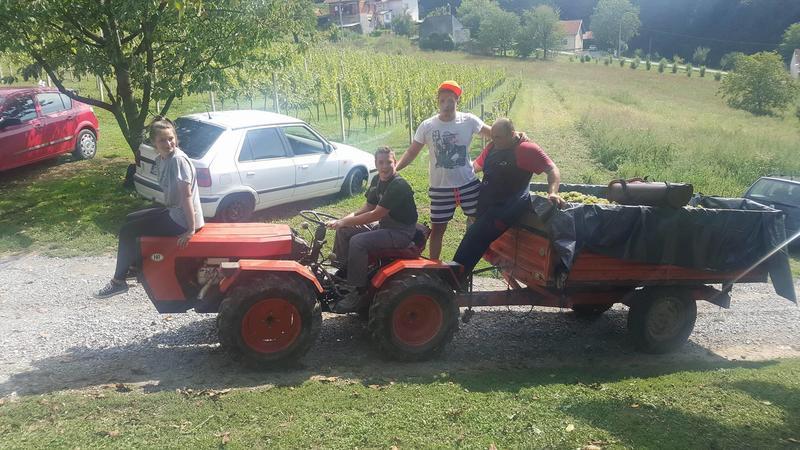 Radovi & poslovi u vinogradu - Page 6 30464367bx