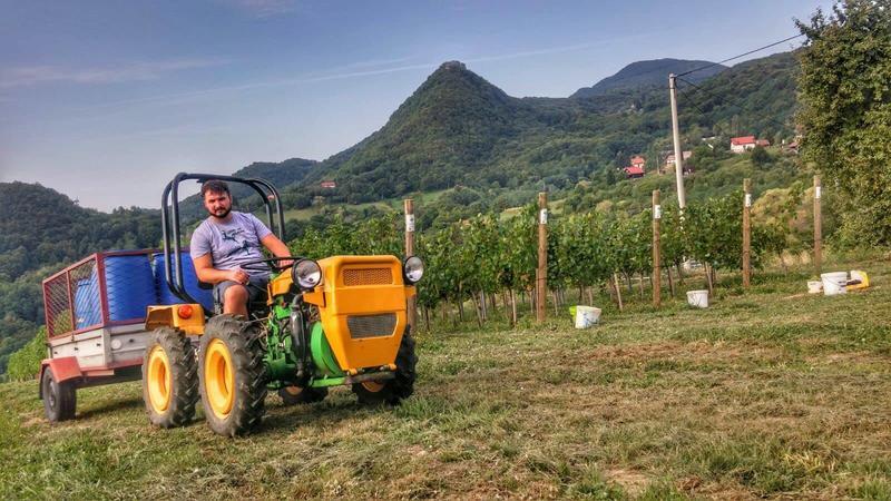 Radovi & poslovi u vinogradu - Page 6 30464379by