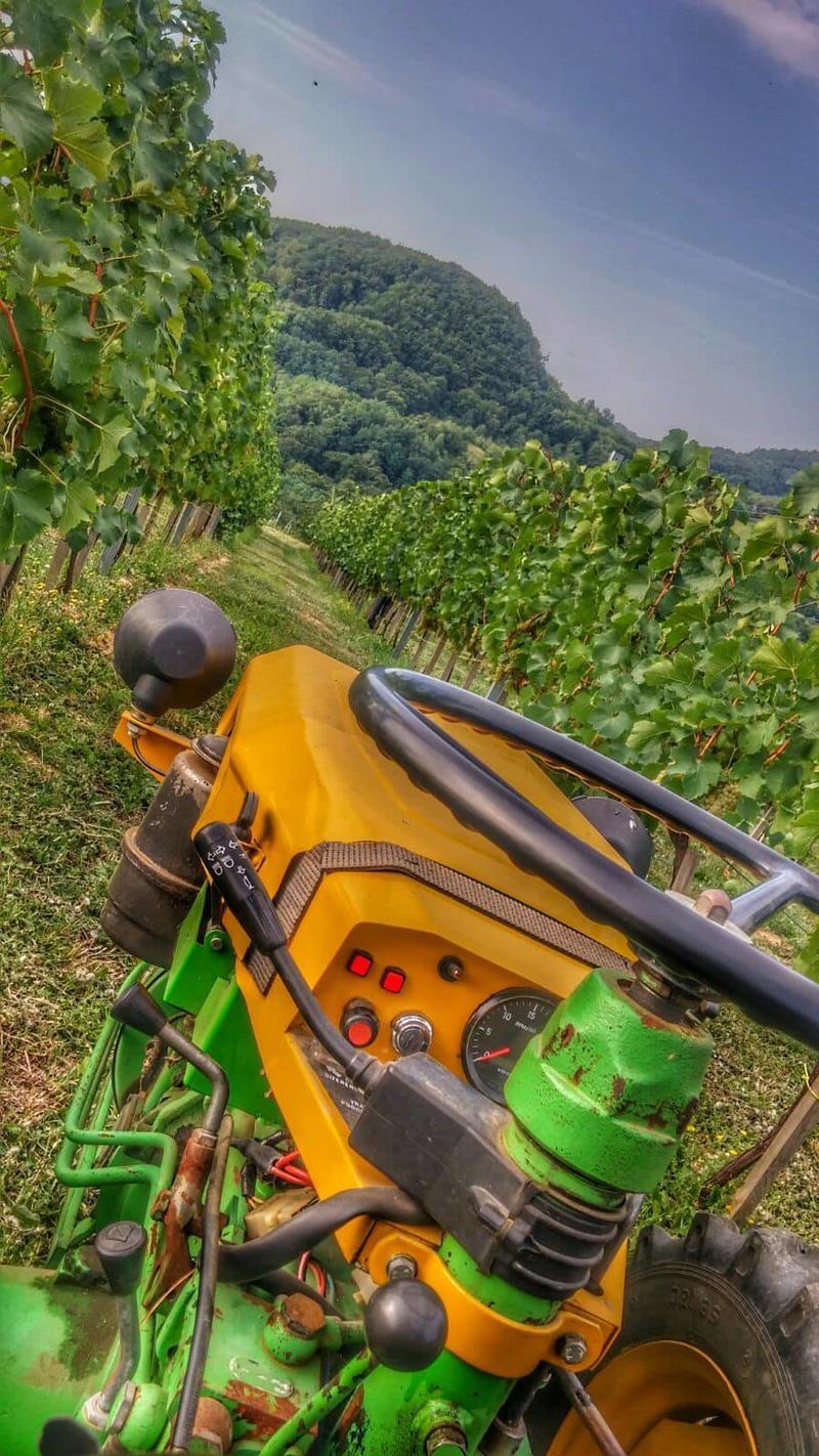 Radovi & poslovi u vinogradu - Page 6 30464380dm