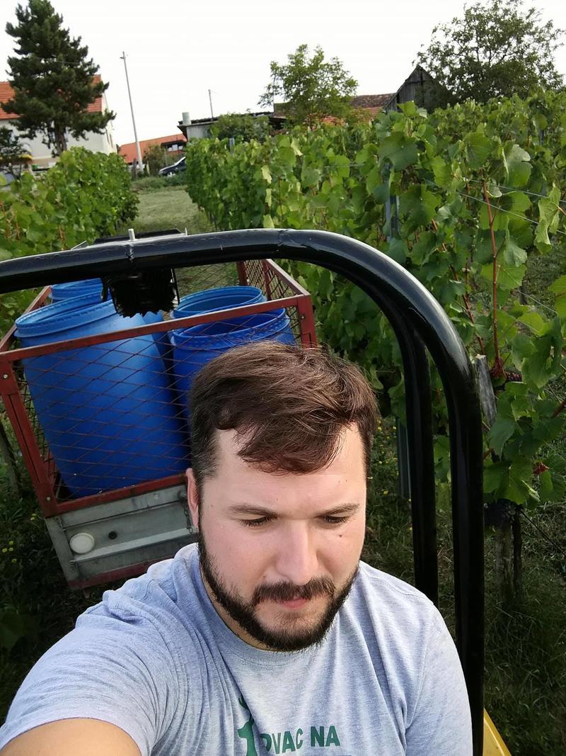 Radovi & poslovi u vinogradu - Page 6 30464381eq