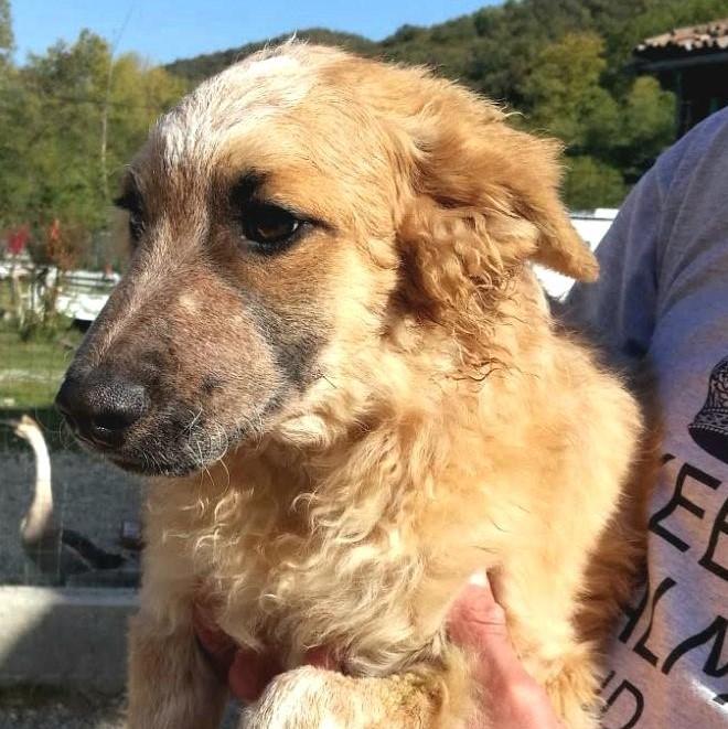 Bildertagebuch- HARRY, hübsches orange-weisses Hundekind sucht seine Menschen...wird über ANDEREN VEREIN VERMITTELT! 30615749nm