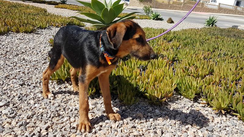 Bildertagebuch - Rusty (vorher Gus) wartet in der spanischen Pension auf seine Family - VERMITTELT - 30676137xr