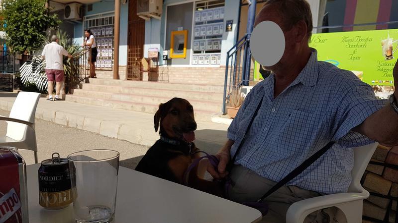 Bildertagebuch - Rusty (vorher Gus) wartet in der spanischen Pension auf seine Family - VERMITTELT - 30676140qo