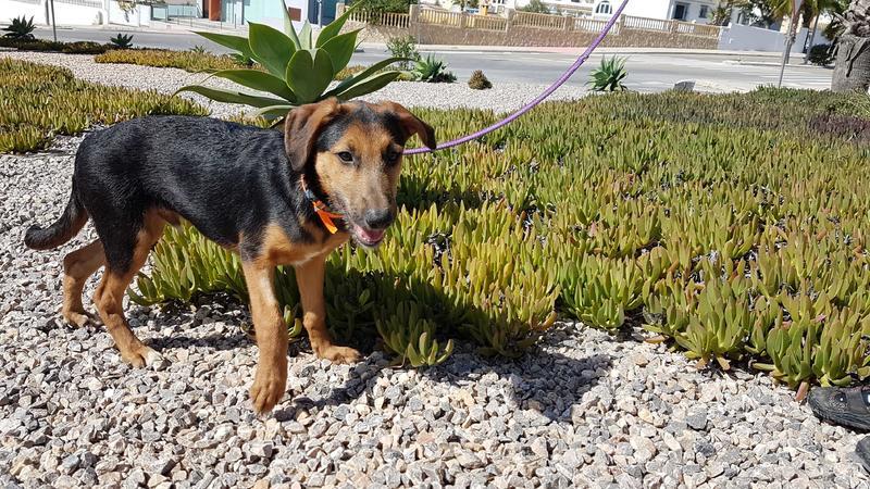 Bildertagebuch - Rusty (vorher Gus) wartet in der spanischen Pension auf seine Family - VERMITTELT - 30676142uu