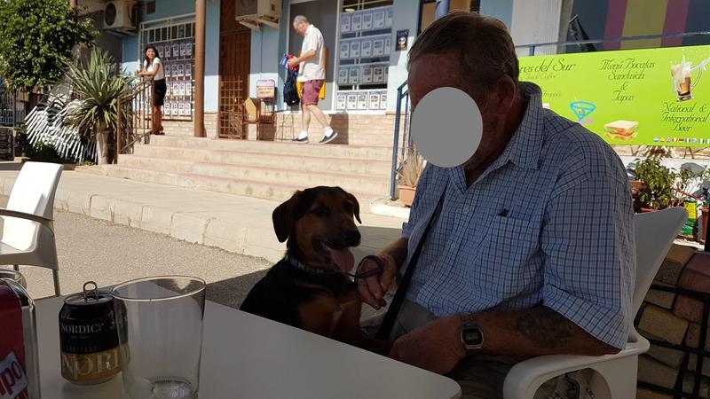 Bildertagebuch - Rusty (vorher Gus) wartet in der spanischen Pension auf seine Family - VERMITTELT - 30676144mb