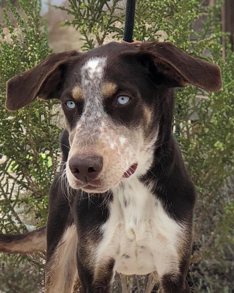 Bildertagebuch- Azul, nette sensible Hundedame mit wunderschönen blitzblauen Augen wünscht sich sehr eine Familie... - VERMITTELT! 30731893jb