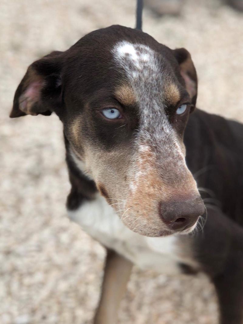 Bildertagebuch- Azul, nette sensible Hundedame mit wunderschönen blitzblauen Augen wünscht sich sehr eine Familie... - VERMITTELT! 30731895kj
