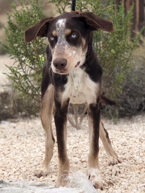 Bildertagebuch- Azul, nette sensible Hundedame mit wunderschönen blitzblauen Augen wünscht sich sehr eine Familie... - VERMITTELT! 30731906gp