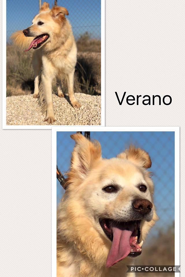 Bildertagebuch - Verano, er wünscht sich endlich ein Zuhause ... 30732076ep