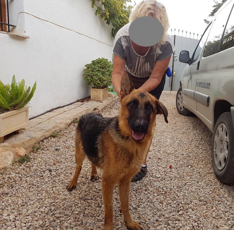 Bildertagebuch- Flopsy, eine ganz liebe sensible Hundedame die immer trauriger wurde und abmagerte, sie hatte sich aufgegeben ... VERMITTELT! 30752582cr