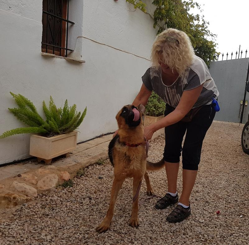 Bildertagebuch- Flopsy, eine ganz liebe sensible Hundedame die immer trauriger wurde und abmagerte, sie hatte sich aufgegeben ... VERMITTELT! 30752585is