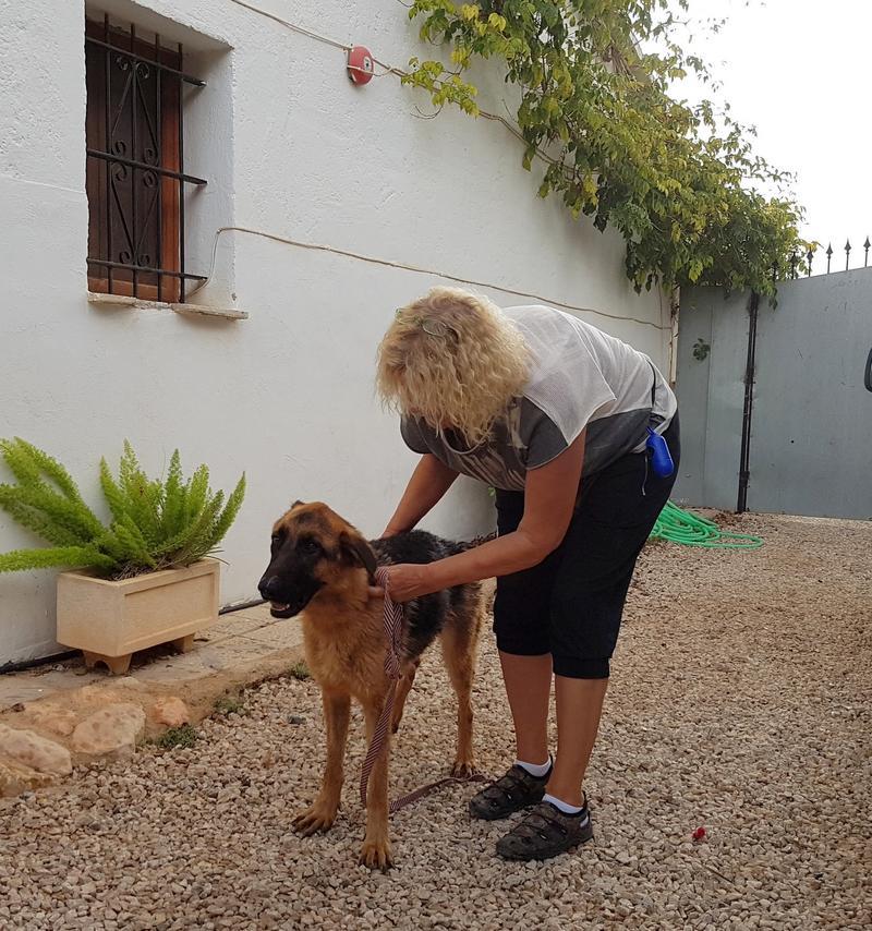 Bildertagebuch- Flopsy, eine ganz liebe sensible Hundedame die immer trauriger wurde und abmagerte, sie hatte sich aufgegeben ... VERMITTELT! 30752586fx