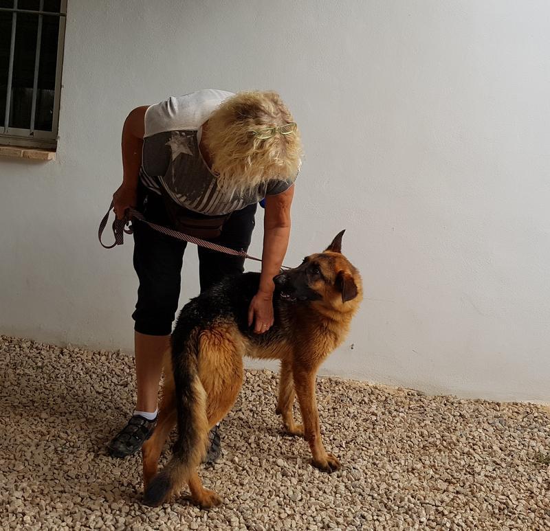 Bildertagebuch- Flopsy, eine ganz liebe sensible Hundedame die immer trauriger wurde und abmagerte, sie hatte sich aufgegeben ... VERMITTELT! 30752587qw