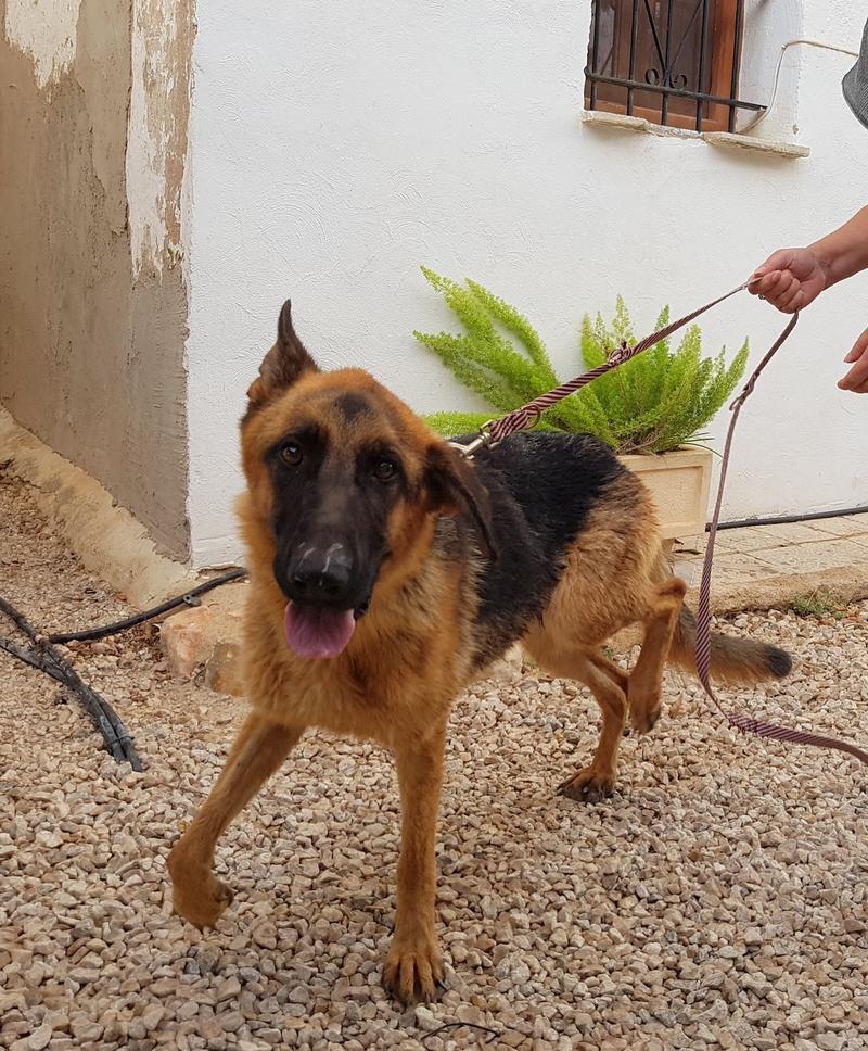 Bildertagebuch- Flopsy, eine ganz liebe sensible Hundedame die immer trauriger wurde und abmagerte, sie hatte sich aufgegeben ... VERMITTELT! 30752588wf