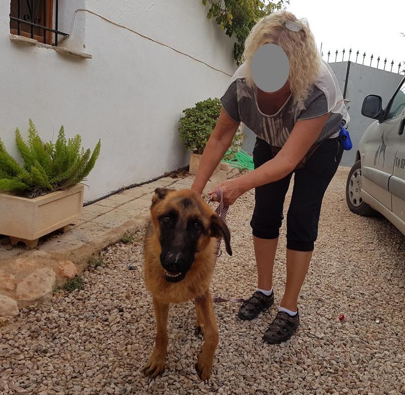 Bildertagebuch- Flopsy, eine ganz liebe sensible Hundedame die immer trauriger wurde und abmagerte, sie hatte sich aufgegeben ... VERMITTELT! 30752589gu