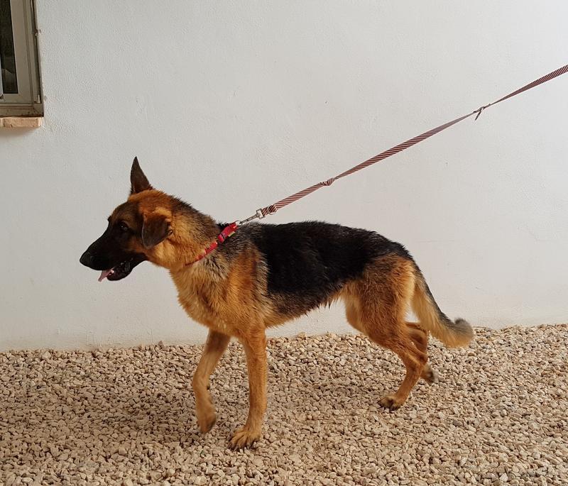 Bildertagebuch- Flopsy, eine ganz liebe sensible Hundedame die immer trauriger wurde und abmagerte, sie hatte sich aufgegeben ... VERMITTELT! 30752590en