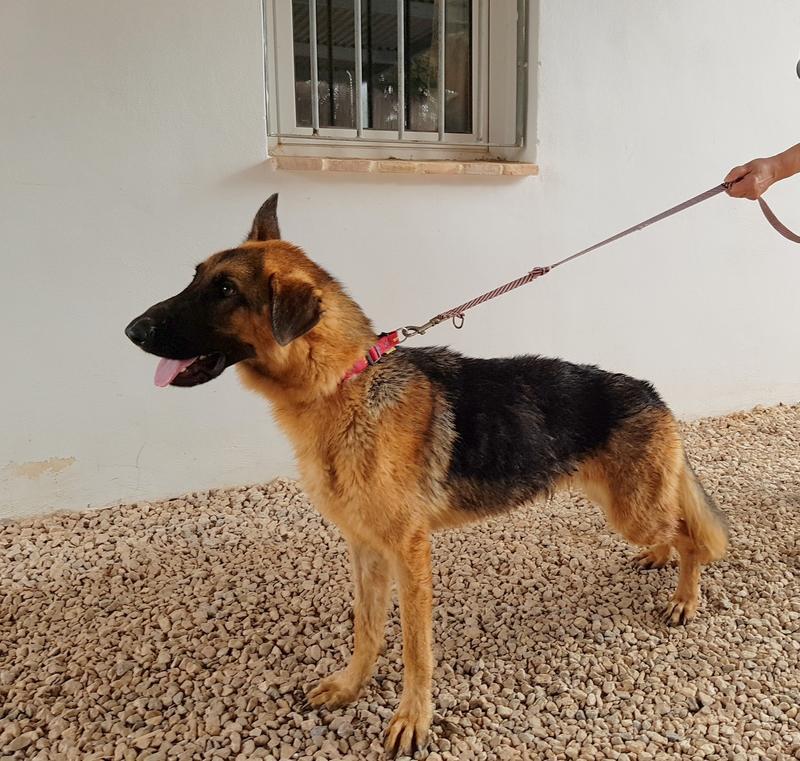 Bildertagebuch- Flopsy, eine ganz liebe sensible Hundedame die immer trauriger wurde und abmagerte, sie hatte sich aufgegeben ... VERMITTELT! 30752591br