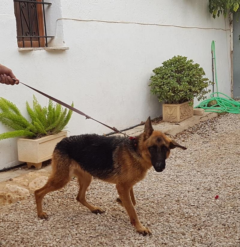 Bildertagebuch- Flopsy, eine ganz liebe sensible Hundedame die immer trauriger wurde und abmagerte, sie hatte sich aufgegeben ... VERMITTELT! 30752606wb